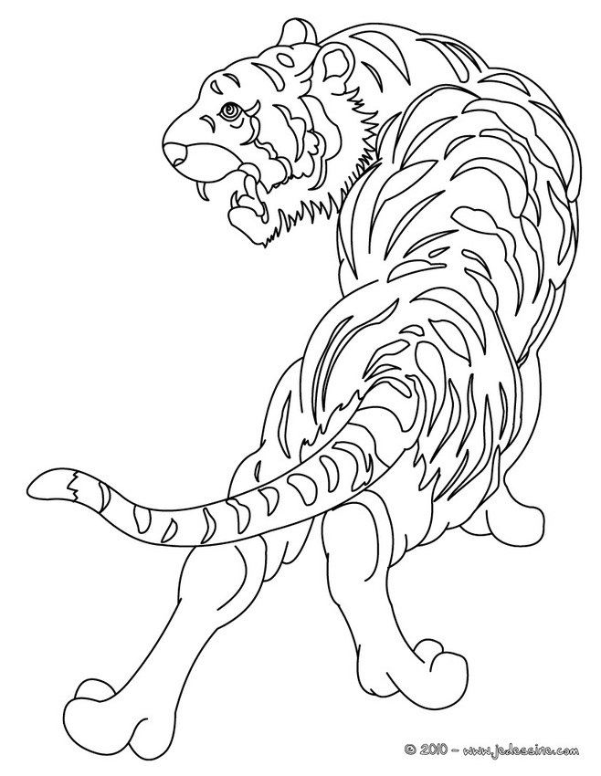 Coloriages de Tigres - Tigre à colorier