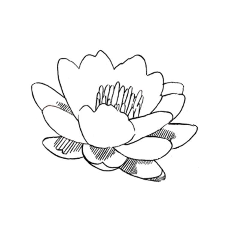 Coloriage Fleur De Lotus A Imprimer Gratuit Az Coloriage