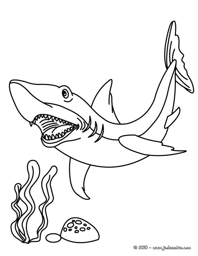 Coloriages de Requins - Coloriage d'un requin mako
