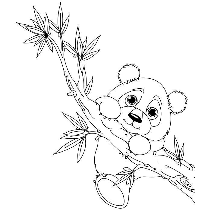 Dessin Koala Az Coloriage