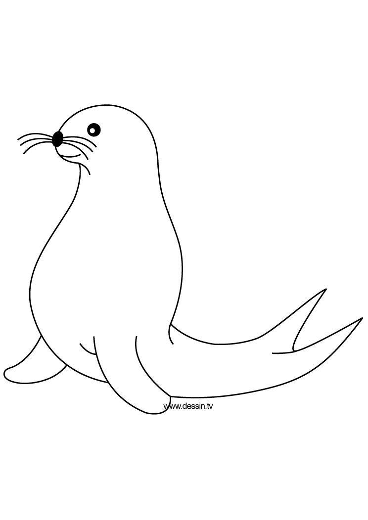 Seal animal clipart