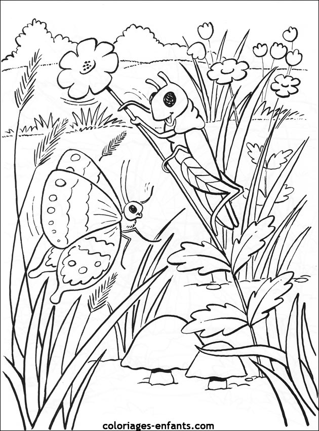 Papillon Difficile Coloriage Az Coloriage