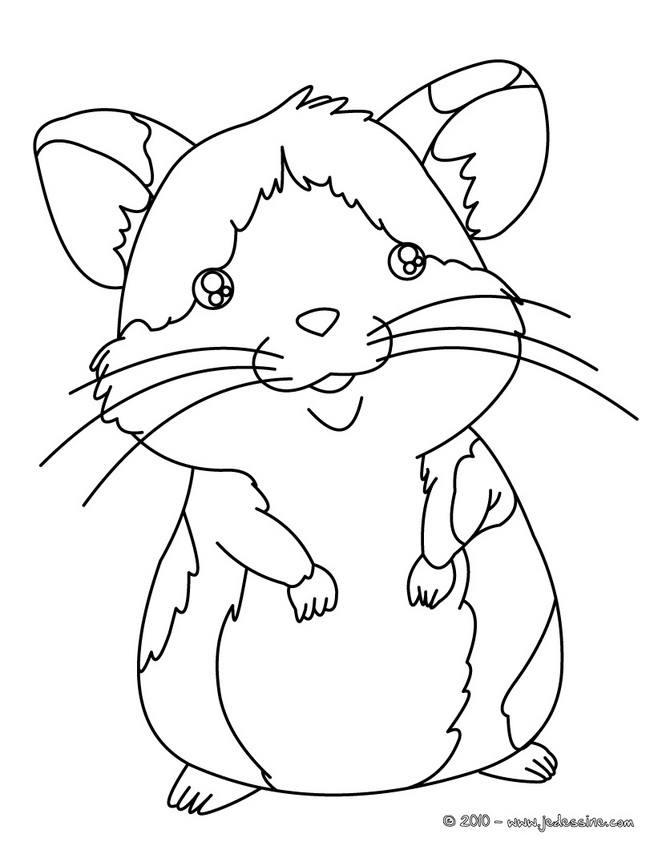 Free Do Hamster Coloring Pages Hamster Coloring Page