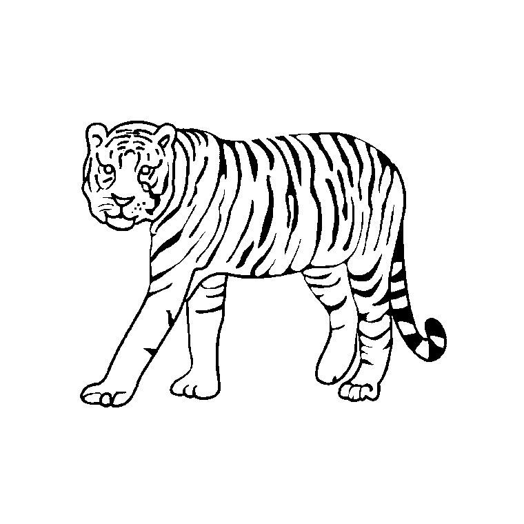 Coloriage Animaux Tigre A Imprimer Gratuit Az Coloriage