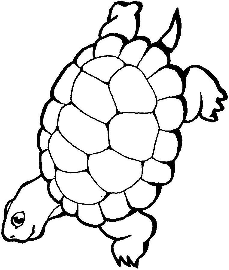 coloriage tortue Coloriage