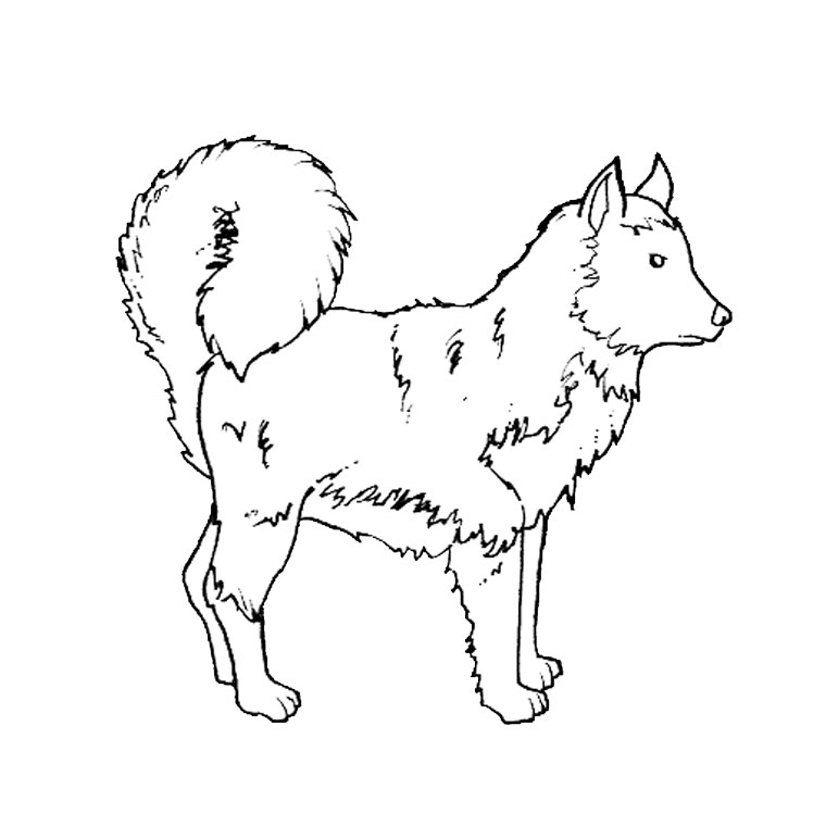 chiots husky Coloriage