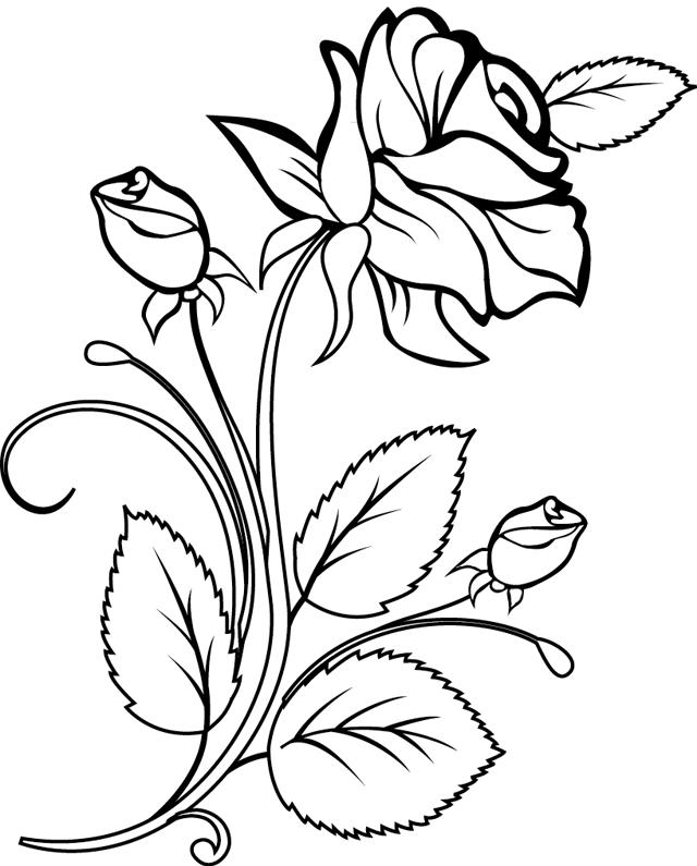coloriage une rose et des boutons de rose dory coloriages - Dessin De Rose A Imprimer