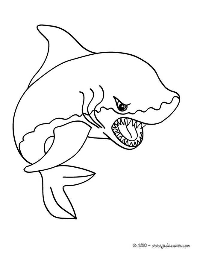 Coloriages de Requins - Coloriage du SHARK