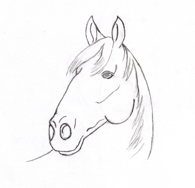 Pin coloriage cheval tete de on pinterest - Dessin de tete de cheval ...