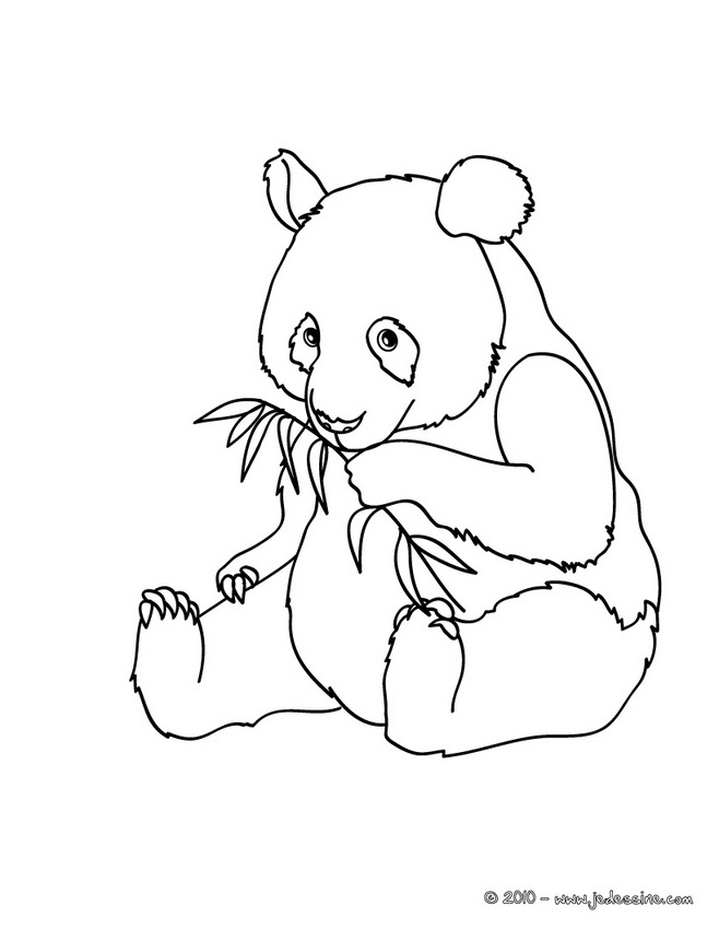 Coloriages de Pandas - PANDA à colorier