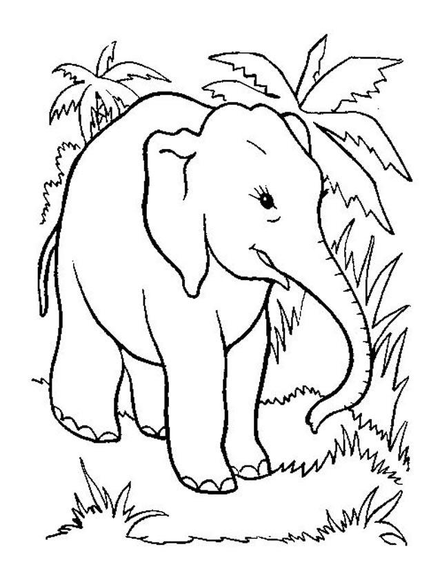 Coloriage Elephant A Imprimer Gratuitement Az Coloriage