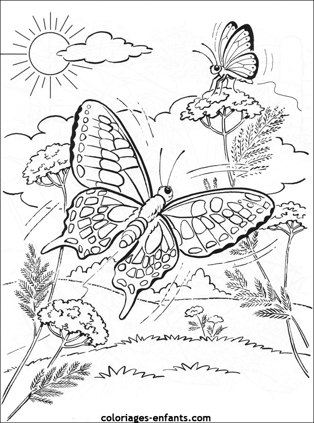 papillon difficile Coloriage