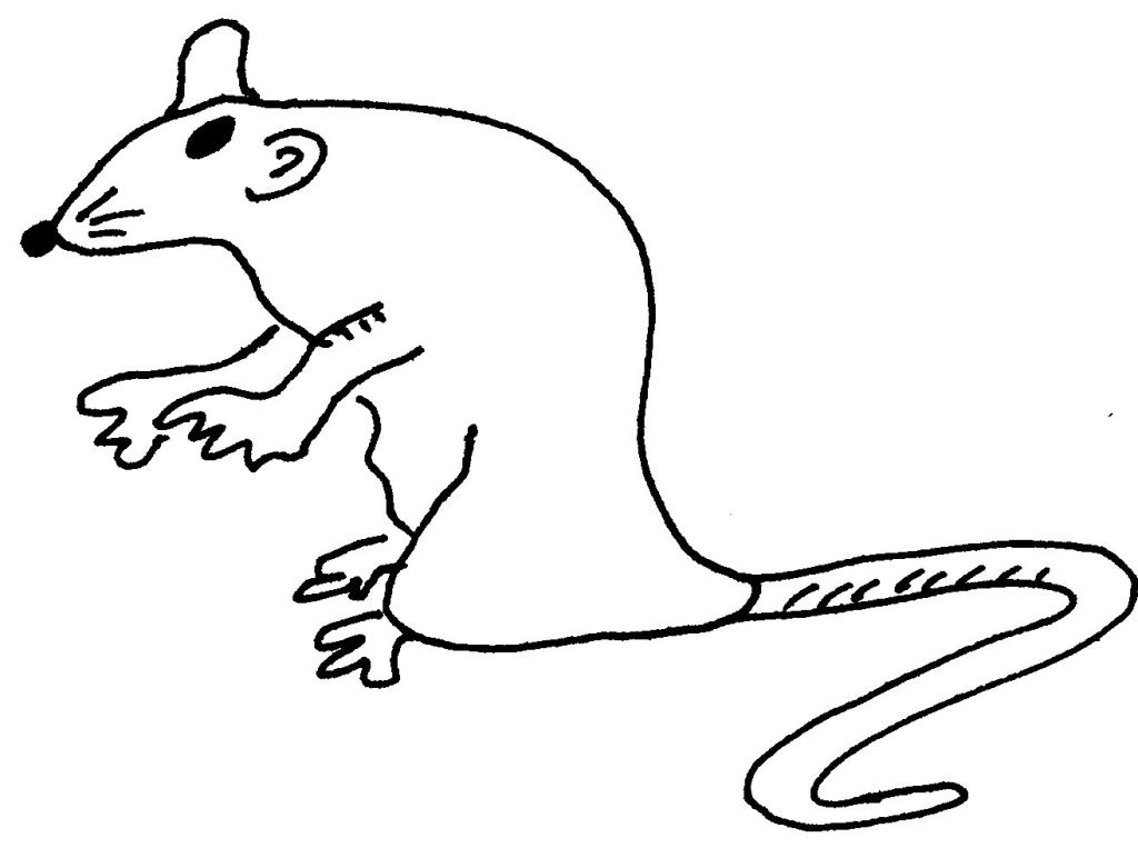 Dessin-coloriage animal : rat animal rongeur - Education