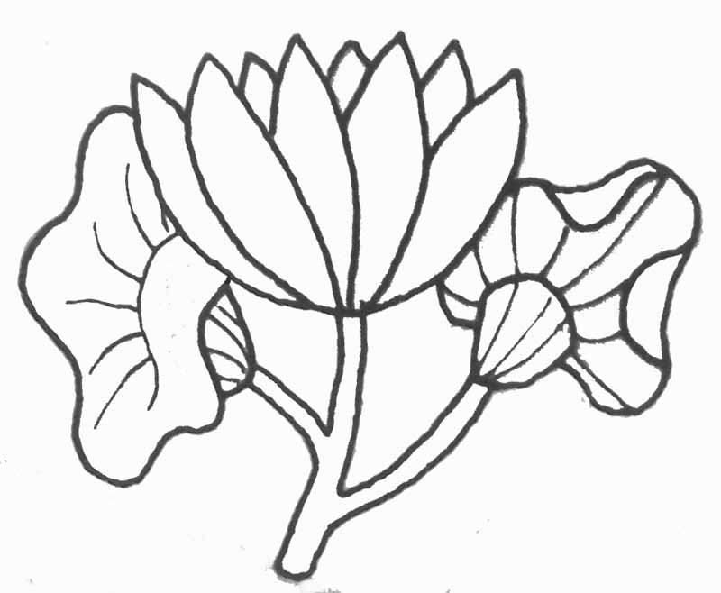 Coloriage Fleur Pot.Pot Fleur Az Coloriage