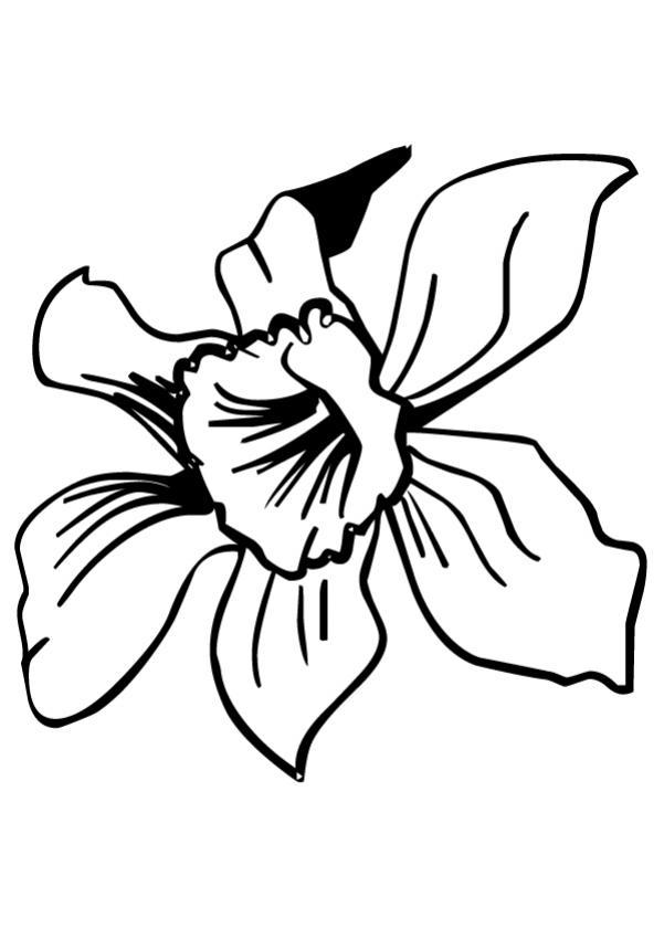 Coloriage De Fleurs Dune Tulipe