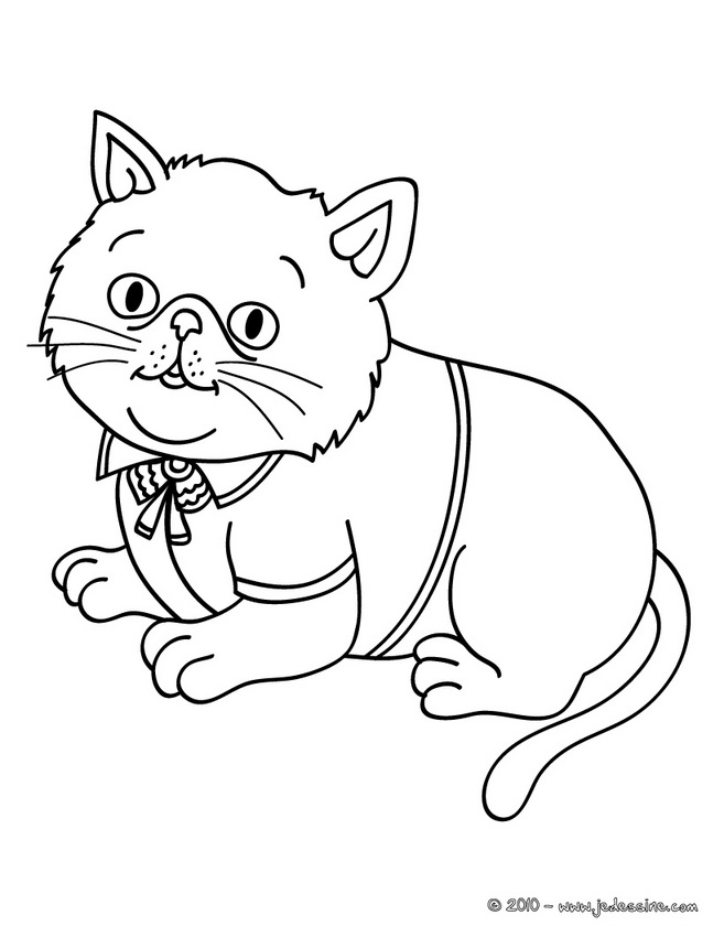 Coloriages de Chat - Chat habillé