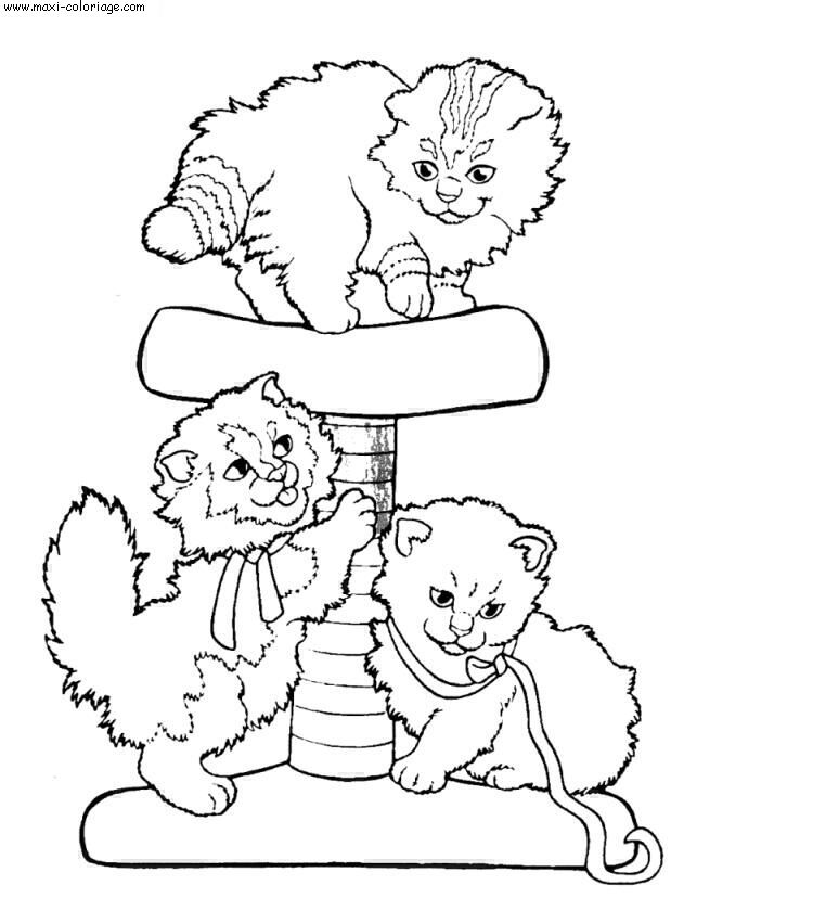 coloriage chats, dessin chats, chats Coloriage N