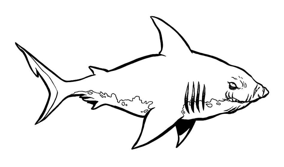 coloriage-requin-12_jpg dans Coloriage de Requins | Coloriages à