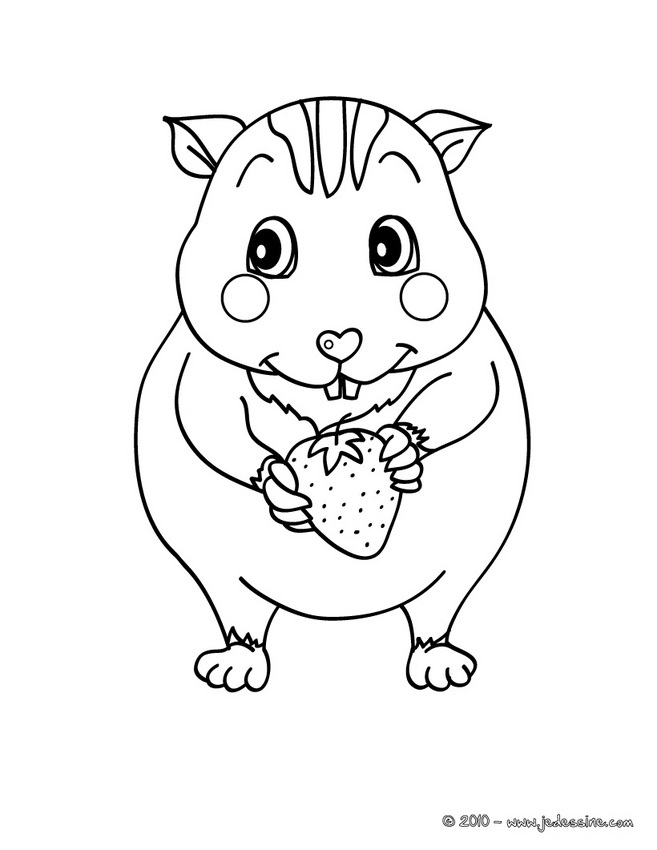 Coloriages de Hamsters - Coloriage d'un bébé HAMSTER