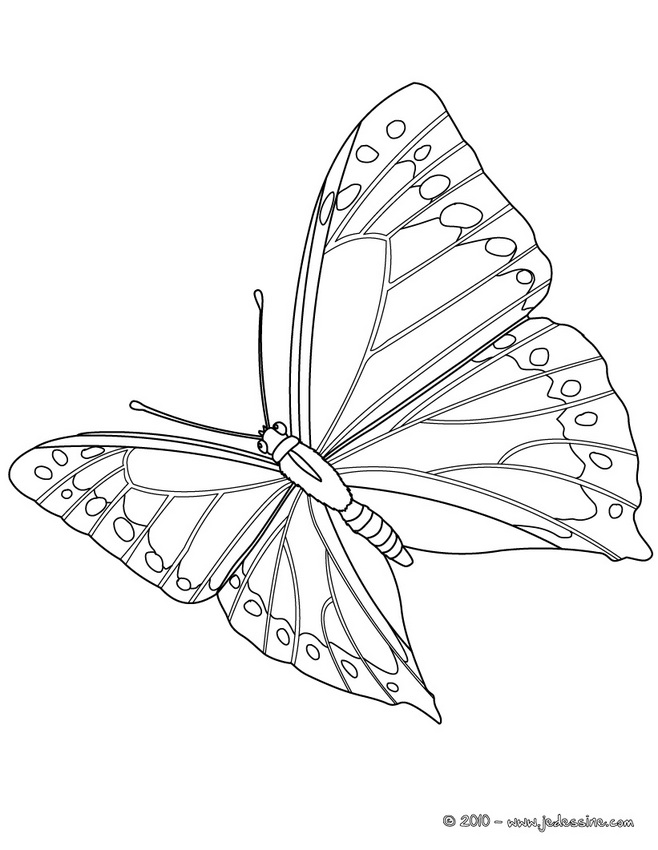 Coloriages de papillons - Papillon en plein vol