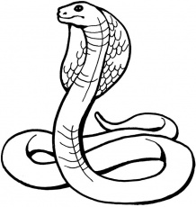 serpentcobraroyal Coloriage