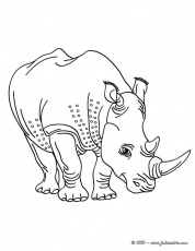 Coloriages de Rhinocéros - Coloriage d'un rhinoceros