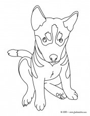 Coloriages de Chien - Scottish terrier