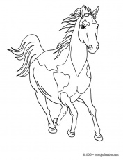 Coloriages CHEVAL - Cheval sauvage
