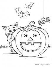 Coloriage CHAT HALLOWEEN - chat rigolo à imprimer