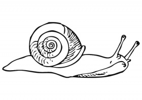Coloriage escargot - img 19180