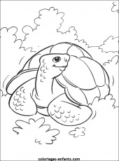 tortues Coloriage