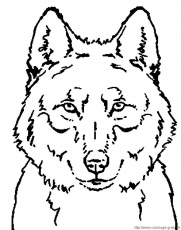 coloriages loup