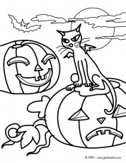 Coloriage CHAT HALLOWEEN - Chat et citrouilles