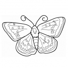 Coloriage Papillon Pet Shop a Imprimer Gratuit