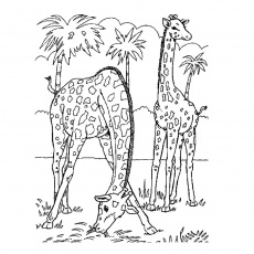 animaux savane Coloriage