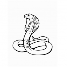 dessin serpent