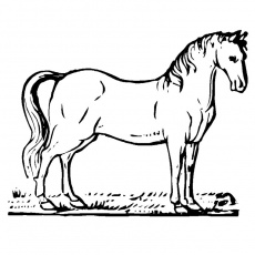 Related Pictures Coloriage Tete De Cheval Arabe A Imprimer