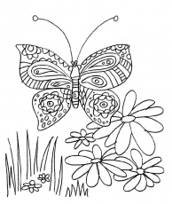 Coloriages papillons