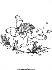 Coloriage de tortue coloriages-enfants.com