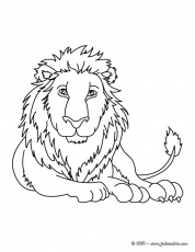 Coloriages de lions - LION à colorier